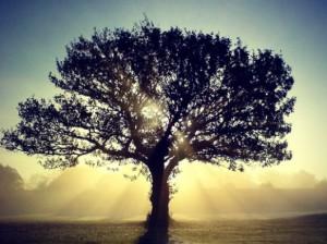 backlit-tree-sunlight